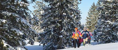 Waldness im Almtal Salzkammergut Winterwald - Pension Wanderruh Gruenau im Almtal