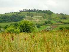 Weingarten - Jois Burgenland