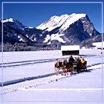 Pferdeschlittenfahrt in Vorarlberg - Vorarlberg
