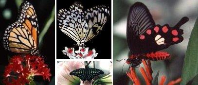 Schmetterlinge - Wien