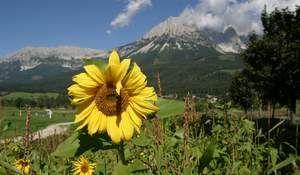 Ellmau Tirol