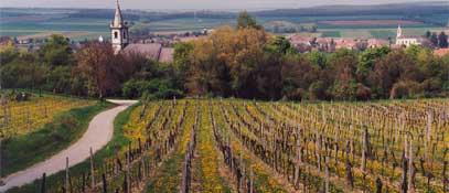 Blick vom Weingebirge - Lutzmannsburg Burgenland
