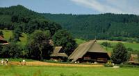 Schwarzwald - Schwarzwald